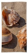 Seashells On The Sand Beach Towel