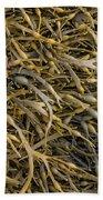 Seaweed On The Coast Of Iceland Beach Towel