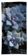 Sedum Clavatum Beautiful Cultivated Stonecrop Beach Towel