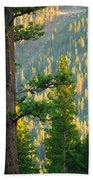 Seeing The Forest Through The Tree Beach Towel