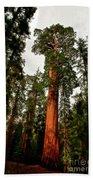 Sequoia In Kings Canyon Beach Sheet