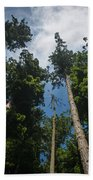 Sequoia Park Redwoods Reaching To The Sky Beach Towel