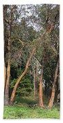 Seward Park Trees Beach Towel