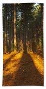 Shadows In Forrest  Beach Towel