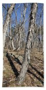 Shagbark Hickory Forest  Beach Towel