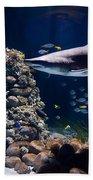 Shark In Zoo Aquarium Beach Towel