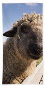 Sheep Face 2 Beach Towel