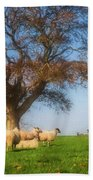 Sheep In Somerset - Impressions Beach Towel