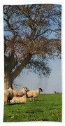 Sheep In Somerset Beach Towel