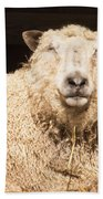 Sheep In Stable 2 Beach Towel