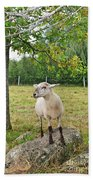 Happy Sheep Posing For Her Photo Beach Towel