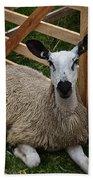 Sheep Two Beach Sheet
