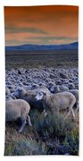 Sheepherder Life Beach Towel