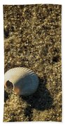 Shell At Dawn Beach Towel