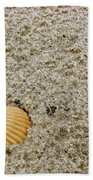 Shells In The Sand Beach Towel
