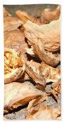 Shells Of Nut Beach Towel