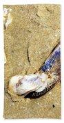 Shells On The Beach Of Jekyll Beach Towel
