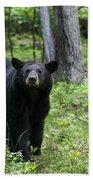 Shenandoah Black Bear Beach Towel