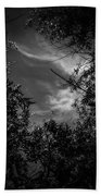Shimmering Tree Branches Beach Towel