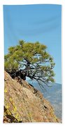 Shrub And Rock At Canon City Beach Towel