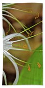 Side View Of Cahaba Lily In Huntington Botanical Gardens In San Marino-california  Beach Sheet