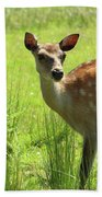 Sika Deer Omagh Beach Towel