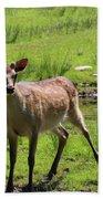 Sika Deer Water Hole Omagh Beach Towel