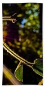Silhouette Of Climbing Vine On A Sunny Afternoon Beach Towel
