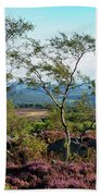 Silver Birch At Surprise View Beach Towel