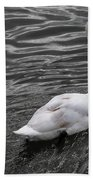 Silver Swan Beach Towel