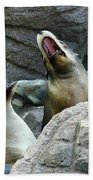 Singing Sea Lions Beach Towel