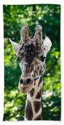 Single Giraffe Beach Towel