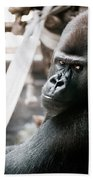 Single Gorilla Sitting Alone Beach Towel