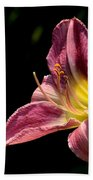 Single Pink Day Lily Beach Towel