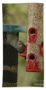 Single Songbird At Feeder Beach Towel