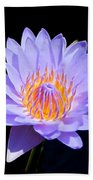 Single Water Lily Beach Towel