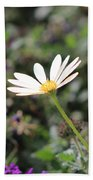 Single White Daisy On Purple Beach Towel
