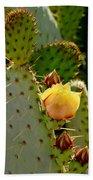 Single Yellow Cactus Bloom 050715a Beach Towel
