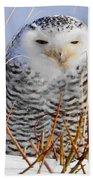Sitting Snowy Owl Beach Towel