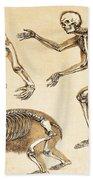 Skeletons Of Man, Ape, Bear, 1860 Beach Towel
