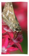 Skipper Butterfly Beach Towel
