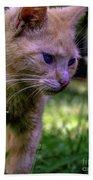 Skippy Feral Cat Portrait 0369b Beach Towel