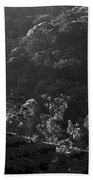 Skn 6707 Tree Parade. B/w Beach Towel