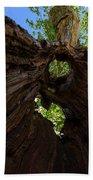 Sky View Through A Hollow Tree Trunk Beach Towel