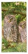 Sleeping Barred Owlets Beach Towel