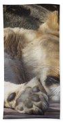 Sleeping Beauty,  Houston Zoo Beach Towel
