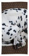 Sleeping Dalmatian II Beach Towel