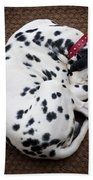 Sleeping Dalmatian Beach Towel