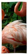Sleeping Flamingo Beach Towel