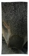 Sleeping Koala Bear Beach Towel